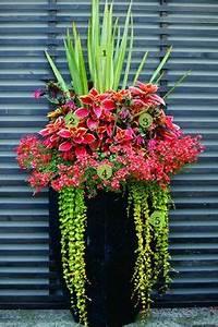 Blumenkübel Bepflanzen Vorschläge : tolle kombination f r balkon oder eingangsbereich beet und balkonbepflanzungen ~ Frokenaadalensverden.com Haus und Dekorationen