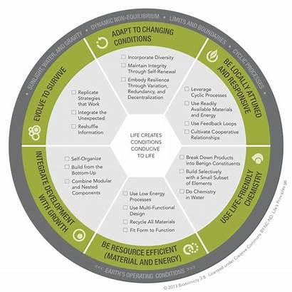 Principles Biomimicry Designlens Lifes