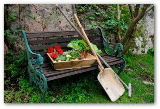 organic vegetable garden planning tips  ideas