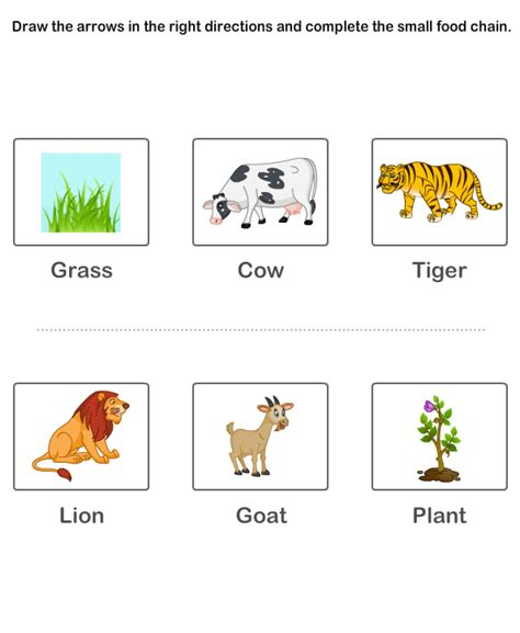 food chain worksheets for