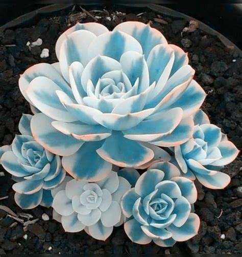 100+ Gorgeous Succulent Plants Ideas For Indoor And Outdoor Full Of Aesthetics - Page 7 of 20 ...