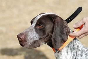 Adventures of a GSP Hunting Dog: Bird Dog Road Trip!!