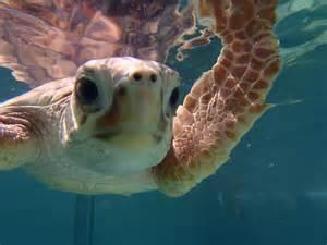 Happy Birthday with Sea Turtle