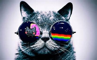 Cat Wallpapers Cool Nyan Glasses Backgrounds Desktop
