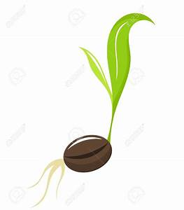 Bean clipart seedling - Pencil and in color bean clipart ...