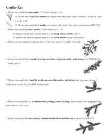 Tree Dichotomous Key Worksheet