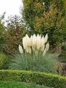 Gräser Im Garten : garten gr ser ~ Lizthompson.info Haus und Dekorationen
