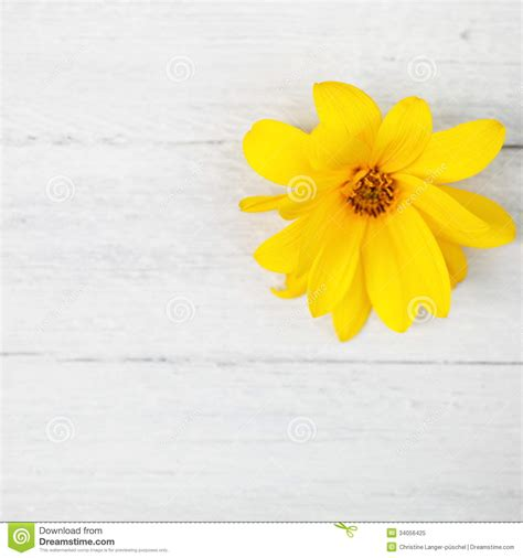 yellow flower  white painted wooden boards stock image
