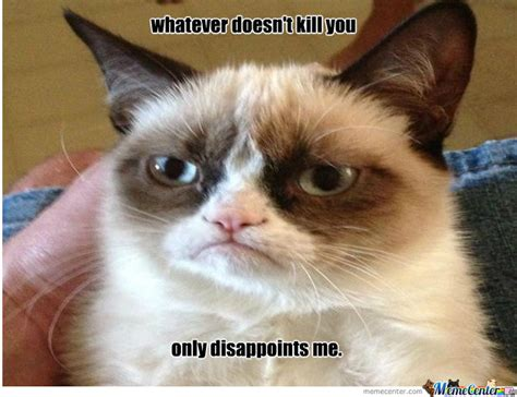 Mean Kitty Meme - funny mean cat memes image memes at relatably com