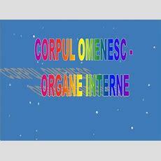Ppt  Corpul Omenesc  Organe Interne Powerpoint Presentation Id2914730
