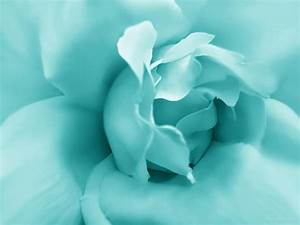 Teal Rose Flower Photograph by Jennie Marie Schell