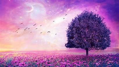 Purple Desktop Background Wallpapers Flower Amazing 1080
