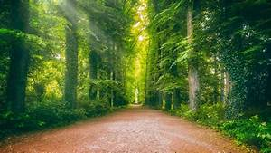 Road, Between, Ivy, Greenery, Forest, 4k, Hd, Nature, Wallpapers