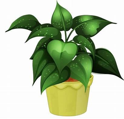 Plant Clipart Potted Clip Plants Pot Flower