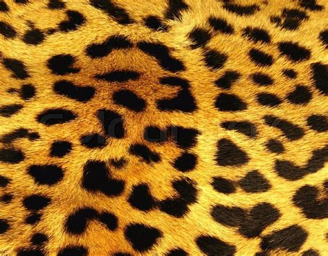 Animal Skin Wallpaper - leopard skin wallpapers pattern hq leopard skin pictures