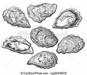 Oyster shell set. Oysters. oyster shell vector set, hand ...