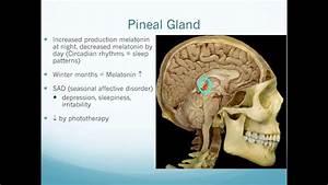 Irritability Anatomy