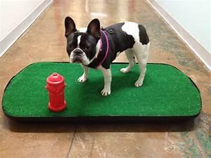 go doggy go indoor dog potty llc pet training 420 s With indoor dog bathroom