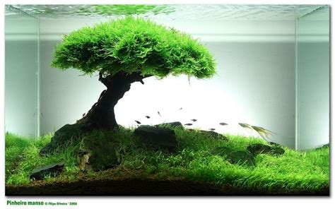 Aquascaping For Beginners by Aquarium Plants For Beginners Woodworking Projects Plans