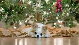 8 Artificial Christmas Trees That Are Safe for Dogs