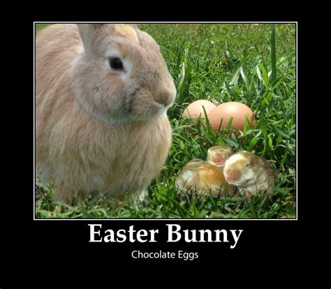 funny easter pictures   cool funny