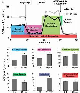 An Increase In Oxygen Consumption Rate  Ocr  During Aging