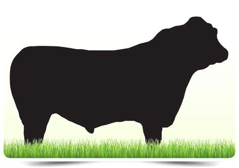 La Res by Carne De Res Frigocolanta 174 Carne De Excelente Calidad
