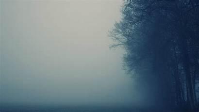 Nature Mist Foggy Backgrounds Trees Desktop Wallpapers