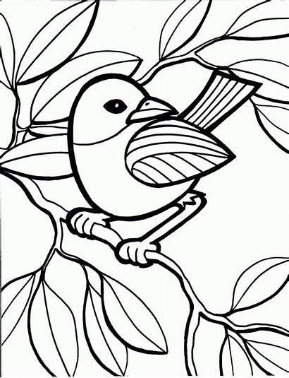 Coloring Bird Pages Printable Colouring Sheet Child