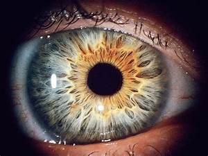 Biometrics Researcher Asks  Is That Eyeball Dead Or Alive