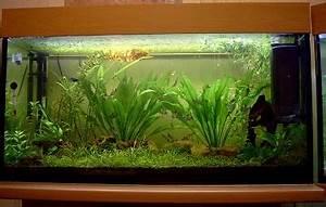 60 Liter Becken : aquarien und fische ~ Michelbontemps.com Haus und Dekorationen