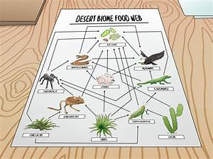 How To Draw A Food Web  11 Steps  With Pictures