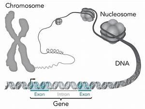 Mutations In Life U0026 39 S  U0026 39 Essential Genes U0026 39  Tied To Autism