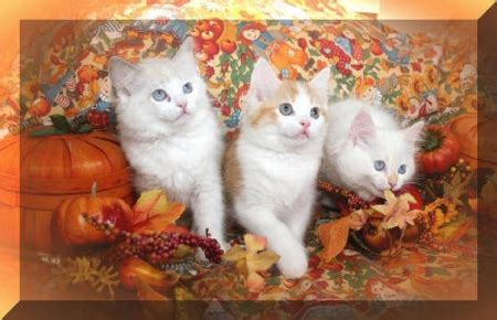 Thanksgiving Animal Wallpaper - thanksgiving kittens cats animals background