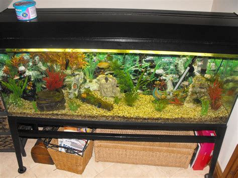 fish tank and accessories for sale gloucester gloucestershire pets4homes