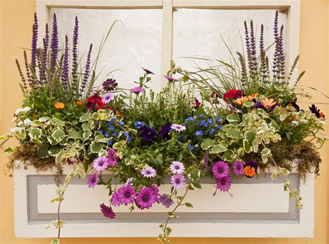 Windowsill Flower Garden by Summer Is Fill It With Color Wagners Greenhouse