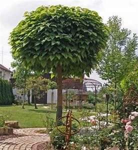 Kugel Trompetenbaum Schneiden : trompetenbaum pflanzen pflegen und schneiden mein ~ Lizthompson.info Haus und Dekorationen