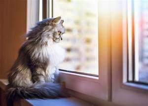 Katze Im Haus Halten : eine neue katze was muss ich wissen stories ~ Lizthompson.info Haus und Dekorationen