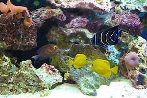 Welche Fische Passen Zusammen Aquarium : peixes do aqu rio da gua salgada foto de stock imagem ~ Lizthompson.info Haus und Dekorationen