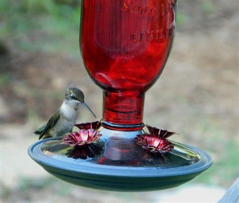 make your own hummingbird nectar hummingbird feeders and