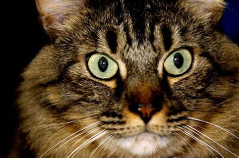 medications   calm cats pets