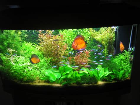 biomax aquarium plant feed best feed you will find at aquarist classifieds