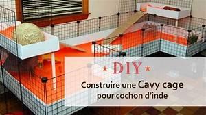 Cage A Cochon D Inde : comment construire une cavy cage pour cochon d inde ~ Dallasstarsshop.com Idées de Décoration