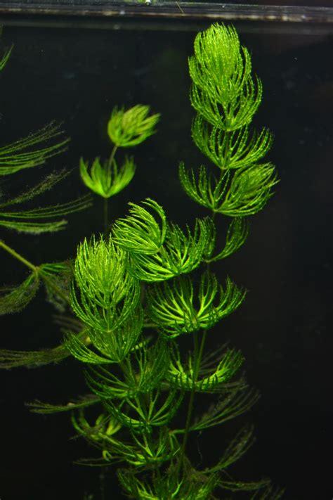 aquarium plant fish plants aquarium and