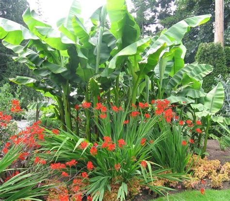 tropical plants zone 7 17 best images about hidden tropics on pinterest trees windmills and tropical