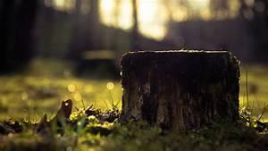 Baumstumpf Verrotten Beschleunigen : m glichkeiten eine wurzel oder einen baumstumpf zu entfernen ~ Watch28wear.com Haus und Dekorationen