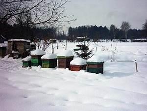 Was Machen Wespen Im Winter : was machen bienen im winter sulz vol at ~ Lizthompson.info Haus und Dekorationen