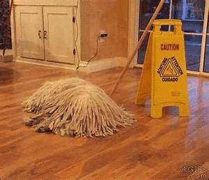14 Ways Your Dogs Can Help You with the Chores | The Dog ...