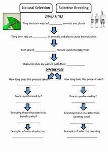 Natural Selection Worksheet