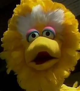 Potty Elmo Big Bird Voice Big Bird In Japan Show Behind The